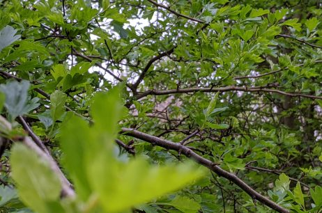 Tree Whisperer for Ledbury Poetry Festival